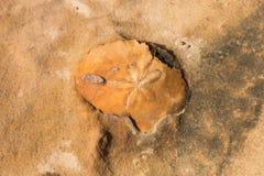 Fossil im Kalkstein Stockbild