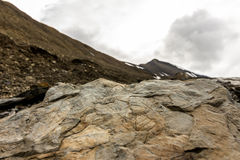 Fossil leaves on a rock on Spitsbergen on Svalbard island Norway Royalty Free Stock Image