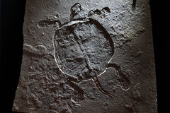 Fossil Royalty Free Stock Photos