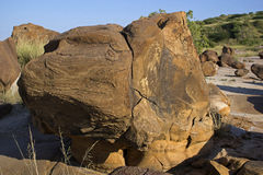 FOSSIL PARK, KUTCHCHH, GUJARAT Royalty Free Stock Image