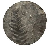 Fossil plant fern pattern on stone surface, drill core. Front view. royalty free stock photography