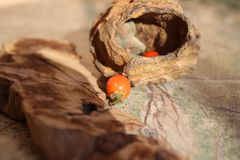 Fossil with red berries on the table royalty free stock photos