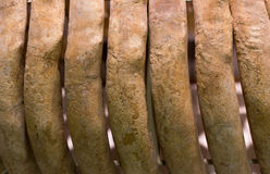 Fossil ribs of old mammal Stock Photo