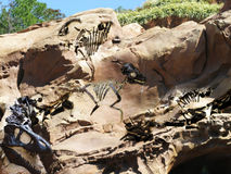 Fossil rock. Fossil's of  assorted ancient dinosaurs Stock Image