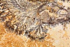 fossil ryb Zdjęcia Stock