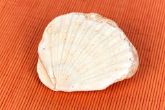 fossil sea shell on the orange background Royalty Free Stock Images
