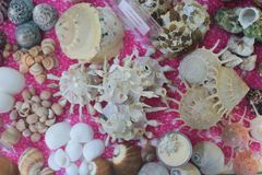 Sea shell and fossil Royalty Free Stock Photography