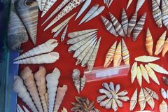 Sea shell and fossil Stock Image