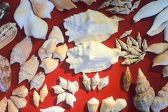 Sea shell and fossil Stock Photography