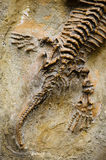 Fossil Seymouria royalty free stock images