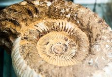 Fossil Shell Stock Photo