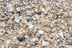 Fossil shell on beach Stock Image