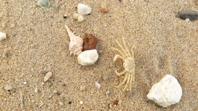 Fossil shell and crab on the sand beach Royalty Free Stock Photography