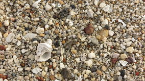 Fossil shells on the beach sand Royalty Free Stock Images
