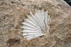 Fossil- skal i vagga i sydliga Italien arkivbilder