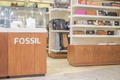 Fossil Stock Photos