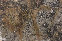 Fossil texture Stock Photos