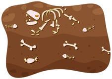 Fossil unter dem Boden Stockfoto