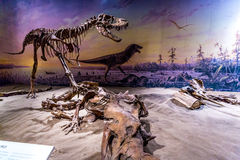 Fossil- utställning i det kungliga Tyrrell museet arkivbild