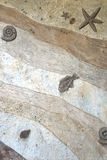 Fossil- väggtexturbakgrund Arkivfoton