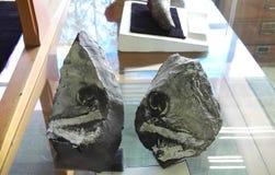 Fossil von kreidigen Fischen lizenzfreies stockbild