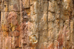 Fossil wood. Surface of fossil wood, shown as featured texture, character and color Royalty Free Stock Photography