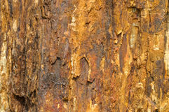 Fossil wood color and texture as iron rust. Surface of fossil wood, shown as featured texture, character and color, looks like surface of iron rust Royalty Free Stock Image