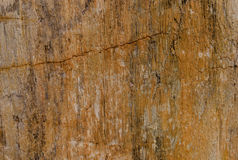 Fossil Of Wood. Texture background Stock Images