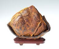 Fossil wood. The Fossil wood on white Royalty Free Stock Photography