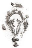 Fossile σκιαγραφία σχεδίων σφραγίδων τριλοβιτών στη σκόνη πετρών, τέφρα, Στοκ Φωτογραφίες