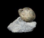 Fossile Photos stock