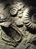 Fossile Fotografia Stock Libera da Diritti