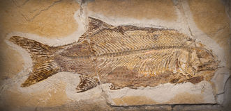 Fossile Photo stock