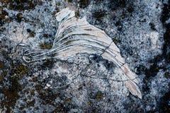 Fossile Photo libre de droits