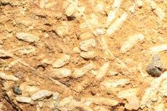 fossile Immagine Stock