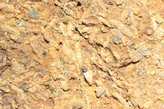 fossile Fotografie Stock