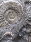 fossile image stock