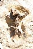 Fossile allo zoo di Praga, repubblica Ceca Fotografie Stock Libere da Diritti