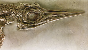 Fossile animal Image stock