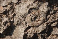 Fossile antico Fotografie Stock Libere da Diritti