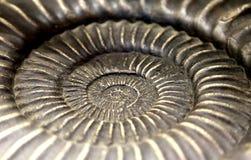 Fossile antique de coquille en forme de spirale rare images libres de droits