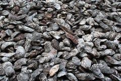 Fossile antique de mollusques et crustacés Photo libre de droits