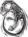 Fossile courbé de Velociraptor Image libre de droits