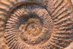 Fossile d'ammonite Images libres de droits
