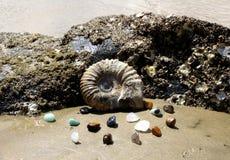 Fossile 1 d'ammonite Photos stock