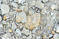 Fossile d'ammonite dans la roche de chaux Photos stock