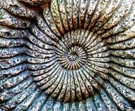 Fossile d'ammonite dans une pierre Photographie stock