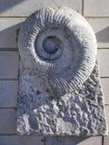 Fossile d'ammonite incorporé dans la pierre Images stock