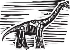 Fossile d'Apatosaurus Images libres de droits