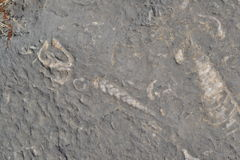 Fossile dans la péninsule de Musandam, Oman image stock